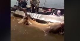 صياد صينى يصطاد سمكة وزنها أكثر من نصف طن