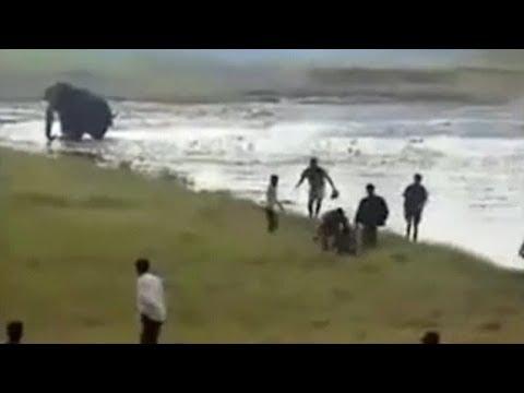 هنا الهند فيل يقتل رجلا دهسا بعد مطاردته… شاهد