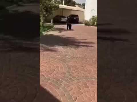 غوريلا تتجول في شوارع الرياض وتصيب السكان بالذعر.. فيديو