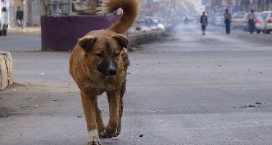 """إنقاذ راكب دراجة روماني من الموت بعدما أصيب خلال جولة في منطقة جبلية بمساعدة """" كلب ضال """""""