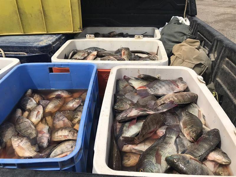 بلدية مدينة الجفر التابعة لأمانة محافظة الأحساء تصادر 240 كليو غراما من الأسماك الغير صالحة للاستهلاك الآدمي