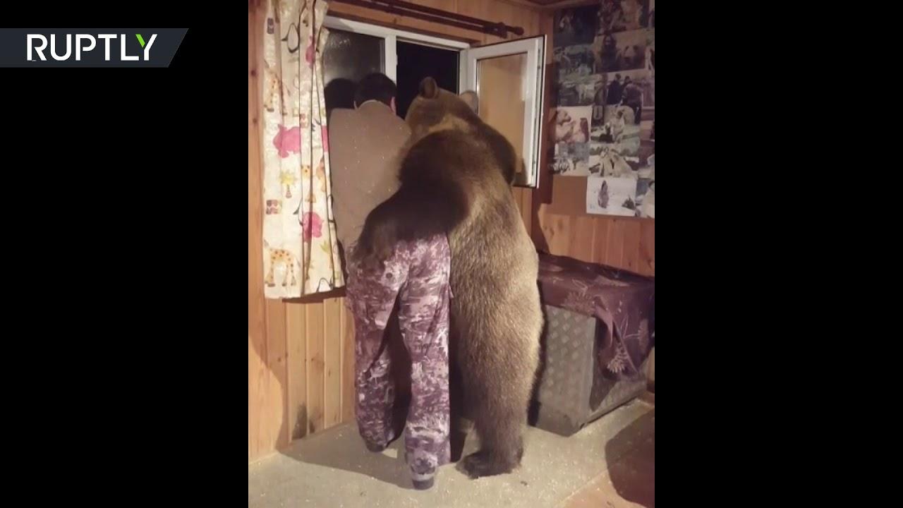 بالفيديو صداقة عجيبة بين رجل روسى ودب