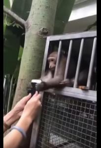 قرد يحاول خطف هاتف سيدة في حديقة للحيوانات في الصين