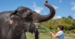 العثور علي فيل مقتول في إحدى مزارع الأناناس بالقرب من العاصمة بانكوك