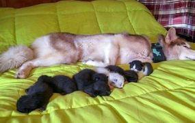 كلبة تتبني قططا حديثة الولادة بعد إنقاذها من الموت