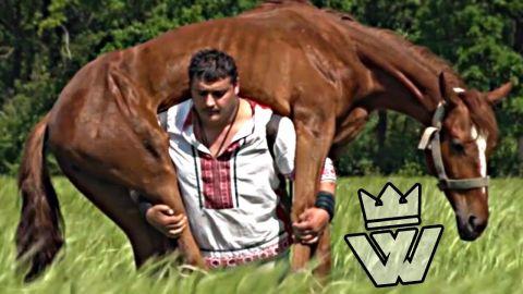 يحمل حصانا لإثبات قوته…. شاهد