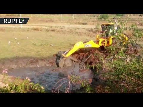 بالفيديو سقوط فيل صغير في حفرة ممتلئة بالوحل