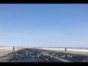 شاهد لحظة سقوط سبائك ذهبية وألماس من طائرة أثناء إقلاعها