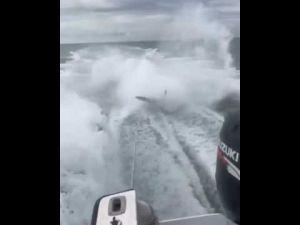 بالفيديو صيادون أمريكيون يعذبون قرشا فى عرض البحر