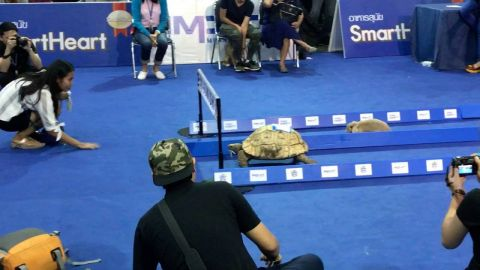 بالفيديو شاهد الفائز فى السباق بين أرنب وسلحفاة