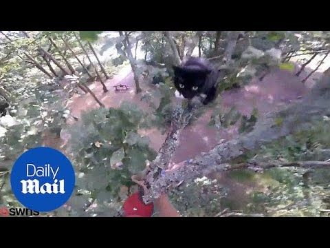 حاول إنقاذ القط فشاهد ماذا فعل القط به؟!