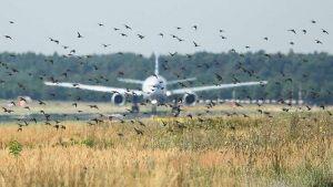 سلاح الجو الأمريكى ينشر قائمة بالطيور الأعداء