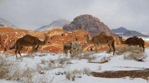 وزارة البيئة المصرية تطرح محميتين طبيعيتين بحق الإنتفاع على القطاع الخاص المصري