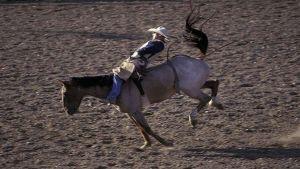 رفسة حصان تساعد في الكشف عن إصابة فارس إيرلندي محترف بمرض السرطان وعلاجه