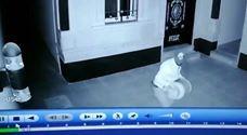 لص عراقى يتحول لنجم بعد سرقته أنبوبة غاز منزلى… شاهد