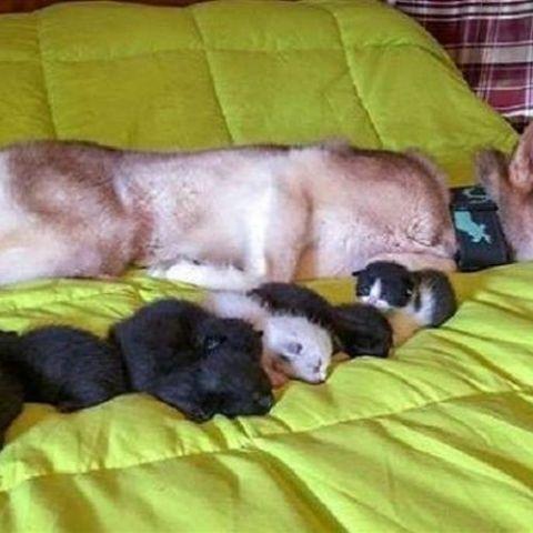 كلبة من مدينة مينلو في ولاية جورجيا الأمريكية تنقذ 7 قطط من الموت كلبة تنقذ 7 قطط من الموت